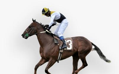 Hestevæddemål