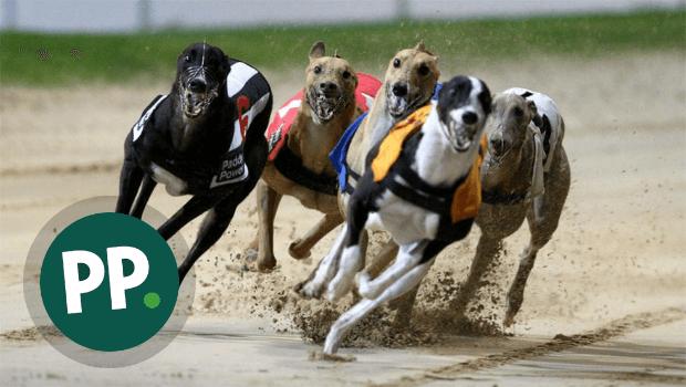 Greyhound Race Betting