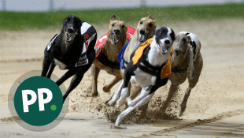 Paddy Power Now Offering BAGS Greyhound Fixtures In-House