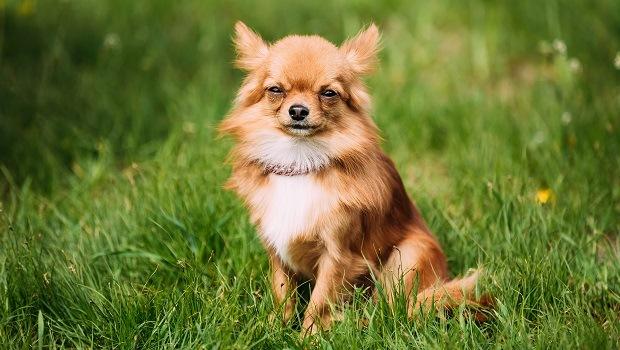 micro gestos de perro