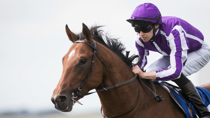 Irish Derby 2018 Betting Tips, Odds and Analysis