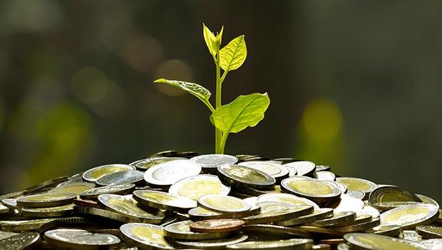 plantita en monedas