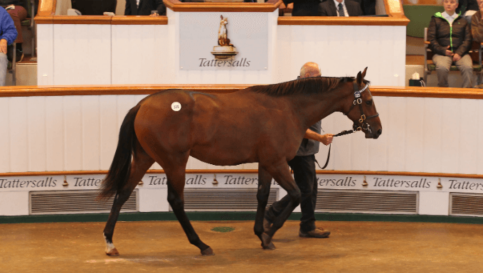 Qatar's £3.6m Colt Enters 2,000 Guineas 2020 Betting