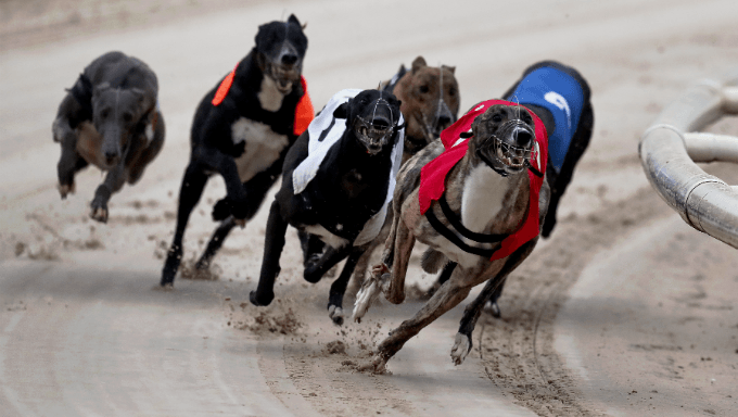 Florida Amendment 13 Voting Guide: Dog Racing Prohibition