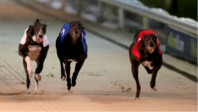 Florida Amendment 13 Results: Dog Racing Ban Approved
