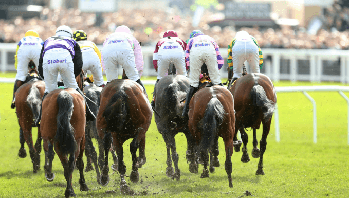 Triumph Hurdle Trends - Cheltenham Festival Betting