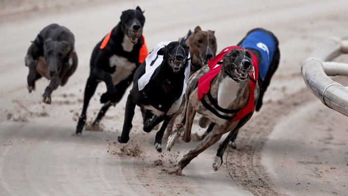 Greyhound Racing - An Irish Industry in the Spotlight