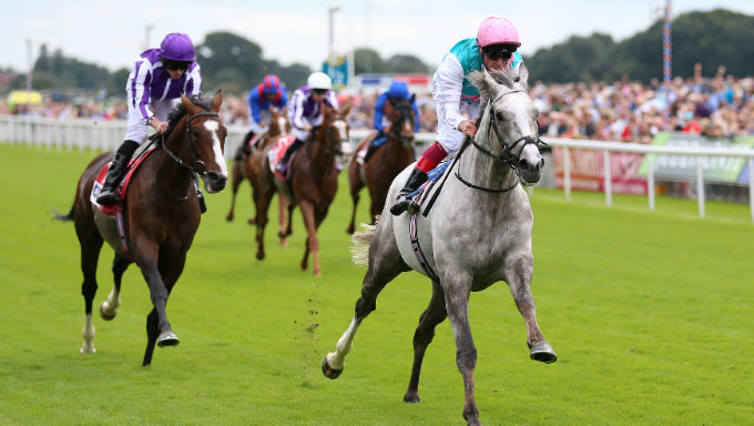 Unbeaten Favourite Logician Cut Again in St Leger Odds