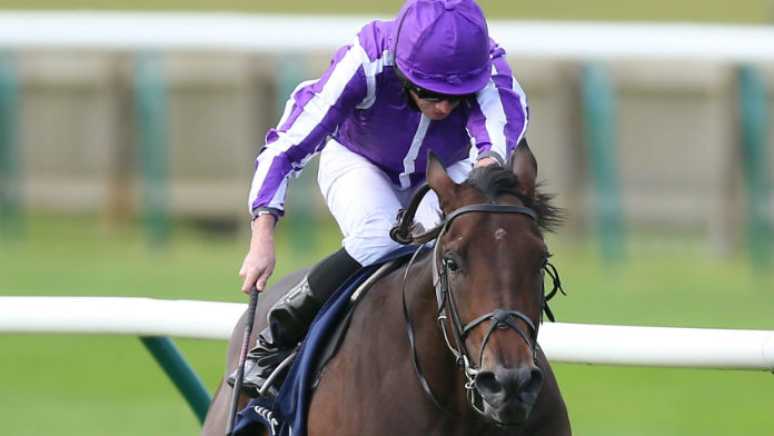 Coolmore Show Faith in Supplementary Dewhurst Entry Wichita