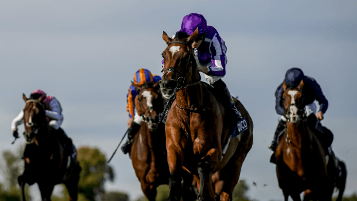 Magical Hardens As Champion Stakes Fav After Japan News