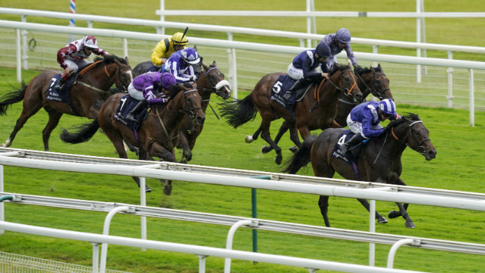 Talking Points Ahead of This Weekend's Racing at Newmarket
